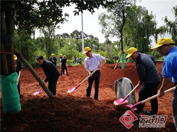 云南:三百人植树修复抚仙湖北岸生态